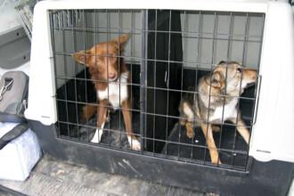 Protest al parintilor fata de problema cainilor maidanezi, vineri, in Piata Romana