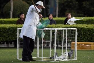 Noua gripa aviara. Expertii in sanatate dezvaluie cat de periculos este virusul H7N9