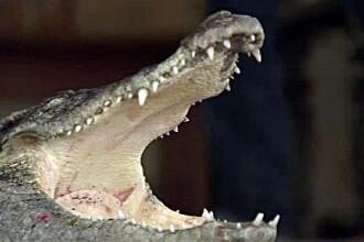 Si-a cumparat doi crocodili ca sa-i pazeasca locuinta. De 15 ani nu a mai fost pradat. VIDEO
