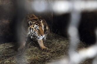 Excursie la Zoo Targu Mures. Weekend special pentru elevii Scolii Speciale pentru Surzi din Cluj