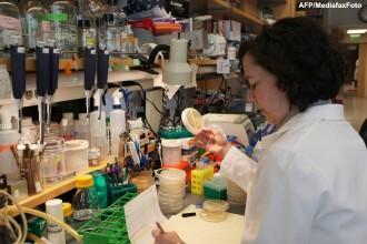 Primul pas catre medicina viitorului. Oamenii de stiinta au creat un rinichi functional in laborator