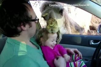 O camila aproape a muscat un copil de 3 ani. Parintii, aspru criticati pentru acest caz. VIDEO