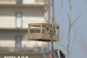 FOTOreportaj. Doi studenti au prins un braconier de pasari in Delta Bucurestiului