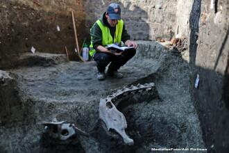 Fragmente din scheletul unui ANIMAL de talie mare au fost descoperite la Timisoara: