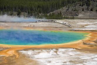 Bizonii din parcul Yellowstone ar putea simti o eventuala eruptie a vulcanului.