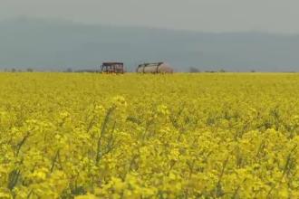 Rapita, asul din maneca al agricultorilor din vestul tarii. Temperaturile crescute promit recolte peste asteptari