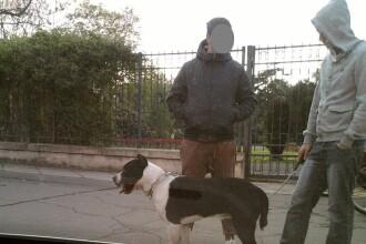 Timisoreni amendati pentru ca si-au lasat cainii periculosi, liberi si fara botnita, in parcurile din oras