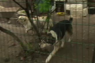 A construit in fata blocului un tarc pentru cainii maidanezi. Reactia vecinilor, satui sa suporte zgomotul si mirosul greu