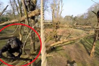 iLikeIT. Viralul saptamanii. Reactia unui cimpanzeu dupa ce vede ca vine o DRONA spre el
