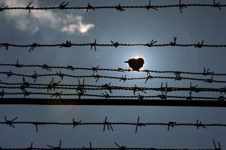 Un detinut a evadat de la Penitenciarul de maxima siguranta Colibasi. Unde a fost prins mai tarziu