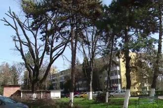 Imagini dezolante in cartierele din Targu Mures. Solutia la care au apelat localnicii terorizati de ciori