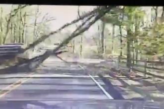 Un copac cade pe un drum circulat, din cauza vantului si ia prin surprindere un sofer. Imagini filmate cu camera de bord