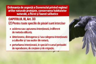 Timisoara vrea sa atraga turistii straini cu... ciorile. Propunerea stranie a Muzeului Banatului: