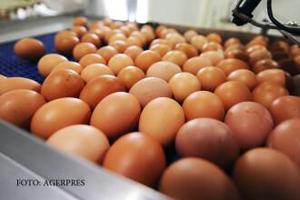 Ce nu stiati despre codurile de pe oua si gainile stresate.