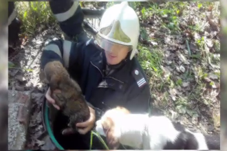 Soarta norocoasa a unui pui de catel salvat de pompieri, dupa ce a cazut intr-un canal, in Timisoara. Cine l-a adoptat