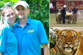 O imblanzitoare a murit dupa ce a fost sfasiata de un tigru, la zoo, sub ochii vizitatorilor. Ce s-a intamplat