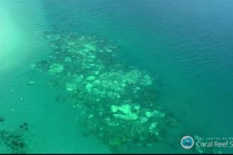 Fenomenul fatal care distruge Marea Bariera de Corali. Ce s-a intamplat cu 93% din recifele de corali din Australia