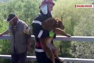 Catel aflat pe un stalp la 15 metri inaltime, salvat de militarii din Craiova. Ce a facut un localnic dupa ce l-au dat jos