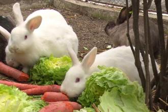 Unii romani le cumpara copiilor iepuri de Paste doar ca sa le faca un moft. Ce se intampla cu animalele dupa sarbatori