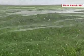 Panza uriasa tesuta de paianjeni pe o pajiste din Noua Zeelanda. Care este explicatia fenomenului