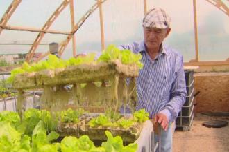 Ferma viitorului. Cum cresc legumele fara pamant, intr-o sera plutitoare conectata la un bazin cu pesti