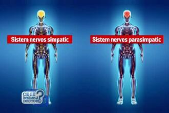 Cand suntem stresati, imunitatea scade si ne imbolnavim. Care este cea mai simpla metoda sa combatem situatiile de stres