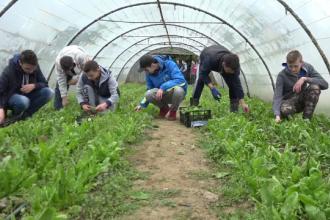 Experiment reușit la un liceu agricol din Maramureș. Unde ajung legumele crescute de elevi, în sere