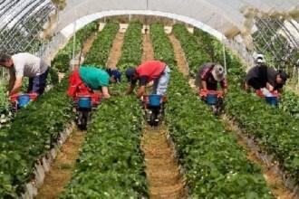 Olandezii s-au săturat de muncitorii români. Noua regulă pe care vor să o impună pentru migranți