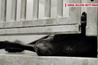 Un bărbat și-a mușcat câinele, după ce a consumat droguri periculoase