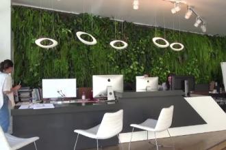 Cât te costă să-ți decorezi pereții casei cu plante, licheni și mușchi