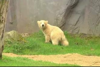 Un pui de urs polar a devenit vedetă în Germania