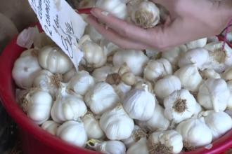 Proiect: Sprijin financiar de 1.000 de euro/ha pentru cultivatorii de usturoi