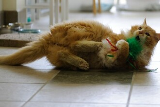 Și-a pierdut pisica în urmă cu 10 ani. Ce a aflat acum bărbatul din Anglia