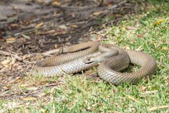 Un bărbat din Mehedinți s-a trezit cu un şarpe în apartamentul său