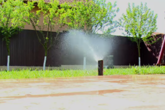 Plante spectaculoase și sisteme de irigații performante, prezente în grădinile românilor