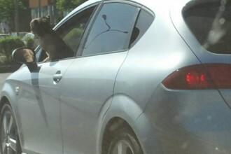 Un șofer a condus prin Brașov cu câinele ieșit pe geam. Poliția face verificări
