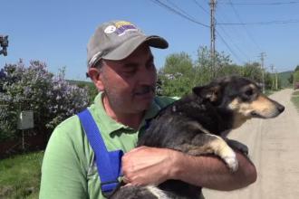 Voluntari veniți din Austria pentru a rezolva problema câinilor vagabonzi din Mureș