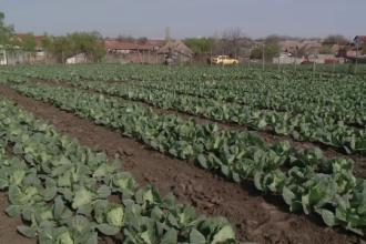 Planta care îi va salva pe fermierii români în bătălia cu clima.