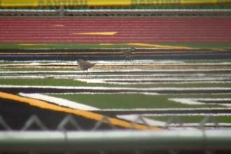 Liceul unde elevii nu pot folosi terenul de sport din cauza păsărilor.