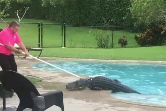 Monstrul de 136 kg găsit în piscină de o femeie din Statele Unite