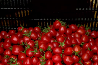 Cât costă roșiile românești ajunse pe piață. Specialiştii au creat 4 soiuri noi