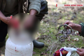 A fost identificat cel care masacra și vindea pui de baltă. Reacția Gărzii de Mediu