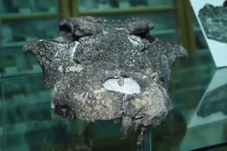 Fosilă unică găsită în România. Când a trăit fiara cu 4 rânduri de dinţi