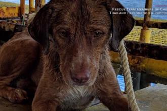 Povestea câinelui salvat din mare, la 200 km de țărm. A fost botezat