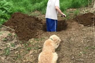 """Momentul emoționant în care un câine vede când i se sapă """"mormântul"""". Ce s-a întâmplat apoi"""