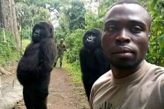 Selfie-ul cu gorile devenit viral pe rețelele sociale. Cum au pozat animalele