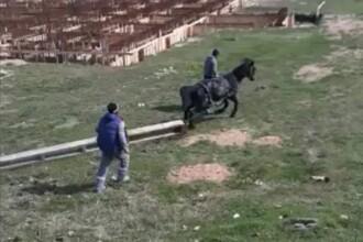 Cal forțat de stăpân să care un stâlp de beton de jumătate de tonă, în Vâlcea