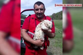 Pompierii români au salvat viața unui iepure. I-au pus un tub de oxigen, să respire