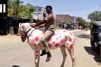Un polițist din India și-a vopsit calul cu imaginea coronavirusului în culoarea roz