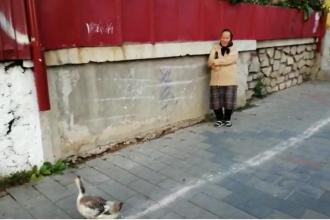 O bătrână din Botoșani a ieșit cu o rață la plimbare prin oraș. Cum a scăpat de amendă